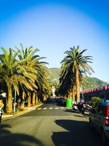 Moneglia-palm-trees
